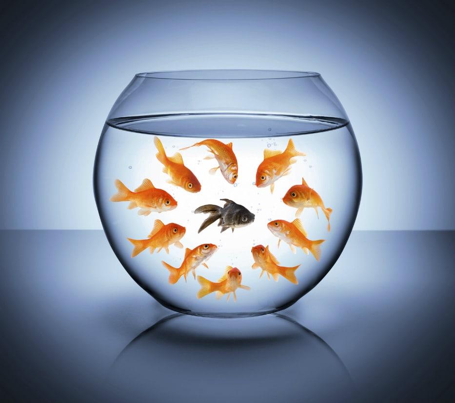 La cosa più difficile non è avere nuove idee, ma sfuggire a quelle vecchie