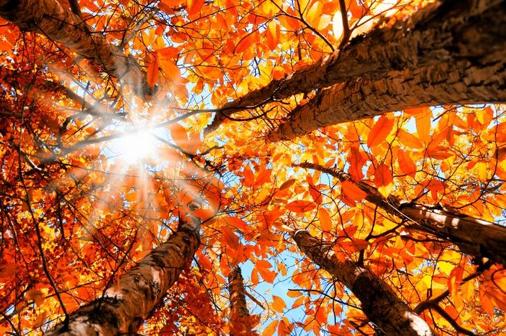 5 preziosi consigli per imparare a coltivare la gratitudine