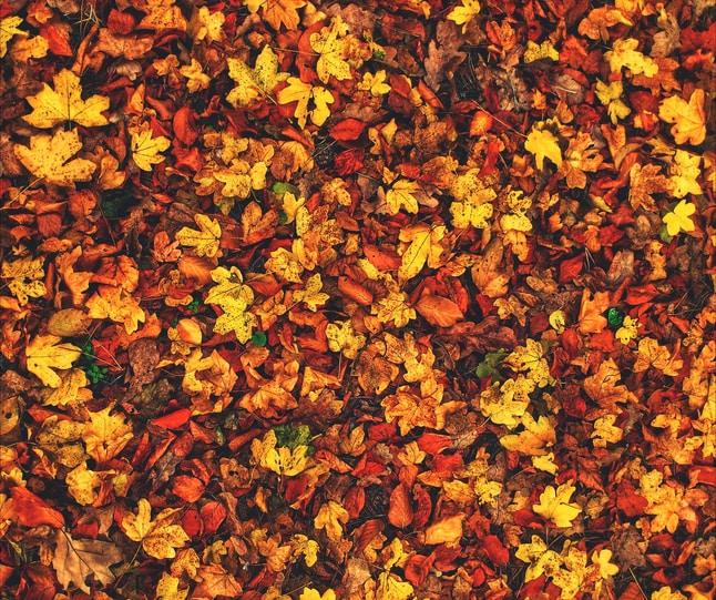 L'autunno è una seconda primavera, quando ogni foglia è un fiore