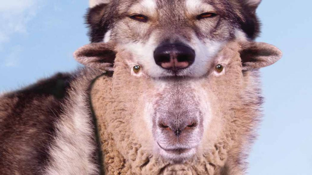 Ognuno di noi, dentro di sé, è sia lupo che agnello