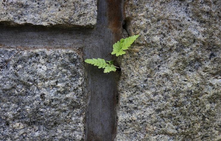 Ecco i 3 mantra quotidiani di ogni persona altamente resiliente