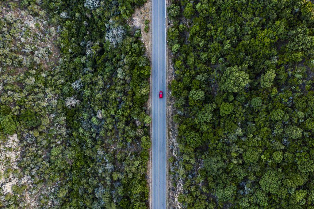 Le foreste non hanno bisogno dell'uomo ma noi abbiamo bisogno di loro