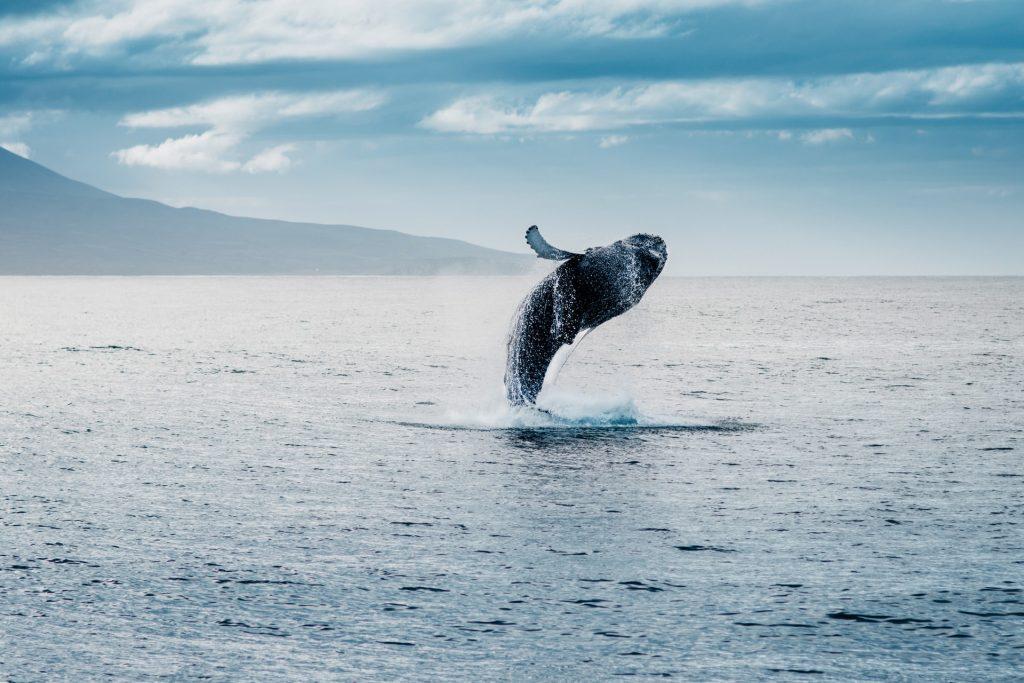 Perché leggere un classico come Moby Dick nel 2020