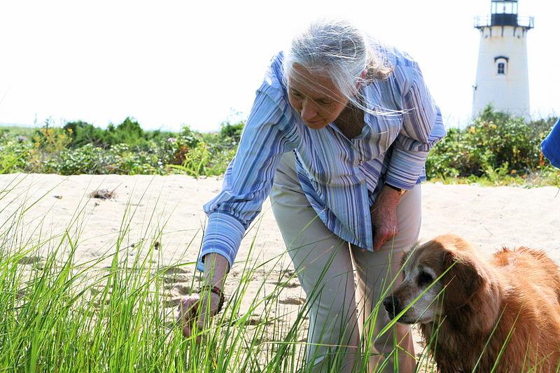 Jane Goodall e il coraggio di ascoltare la nostra voce interiore