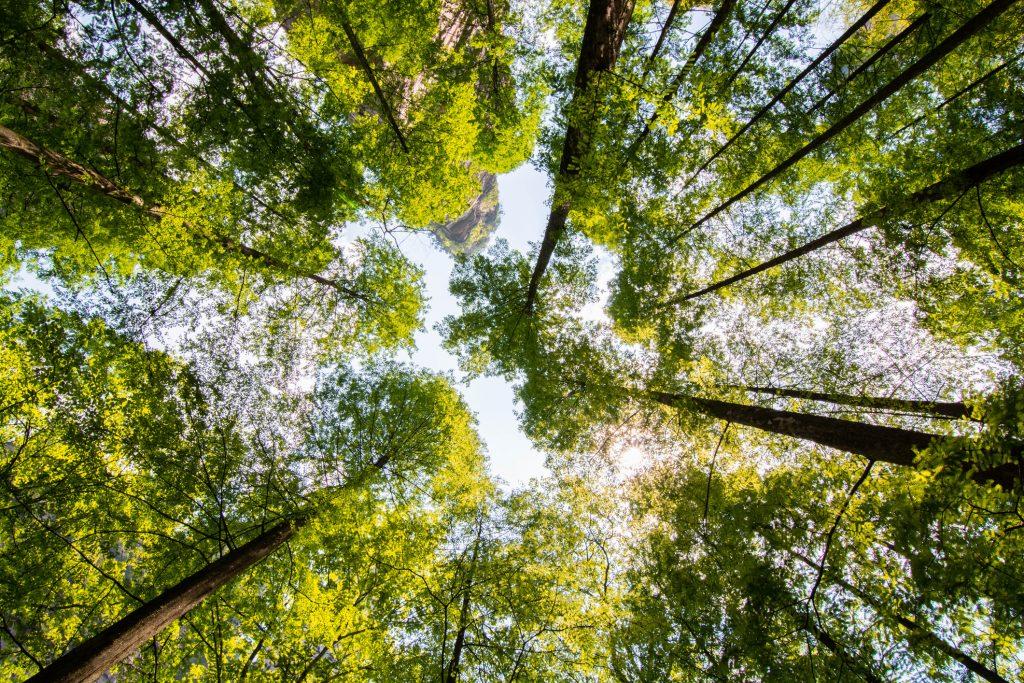 Treedom – Pianta un albero ovunque nel mondo con un click