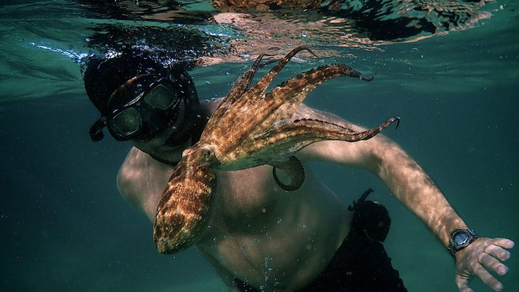 """""""My Octopus Teacher"""" ci insegna come riscoprire l'amicizia pura ed i suoi benefici"""