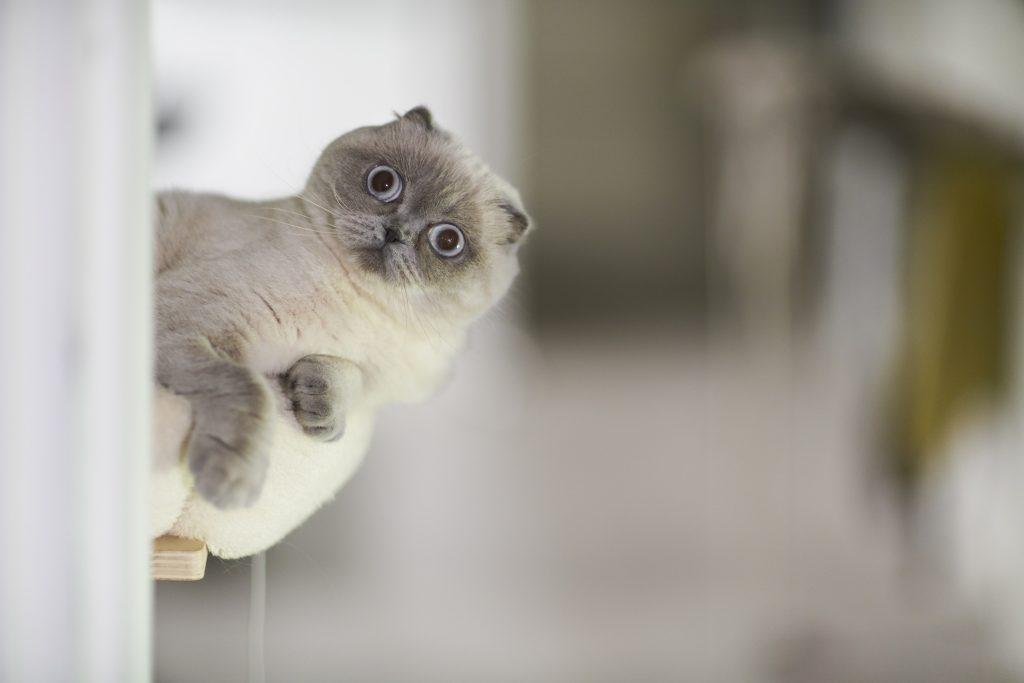 Un gatto per amico: perché è una buona idea