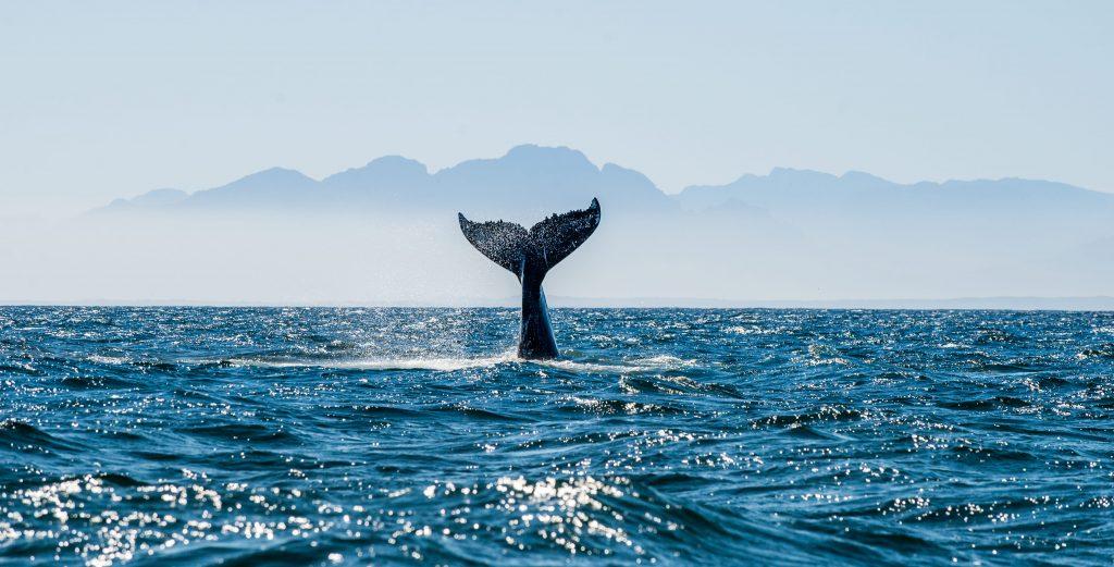 Ispra, rapporto sugli habitat: il 54% della fauna terrestre e il 22 di quella marina sono a rischio